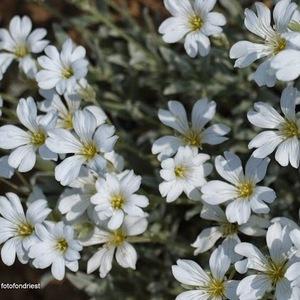 Kvet VIII.