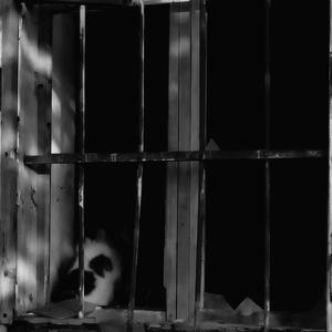 Mačka v okne.