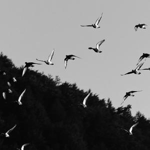 Vtáky II.