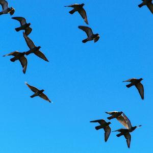 Vtáky I.