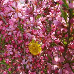 Kvet VII.