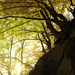 Špania Dolina, les nad haldou