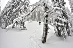 Zimnou krajinou...