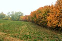 a máme tu jeseň