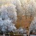 Zima z okna