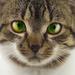 Éterický mačiak Mico