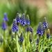 ...prírastok v jarnej záhrade...