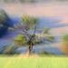 duša stromu