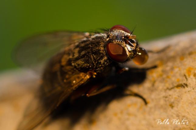 Aj muchy majú svoje dni