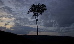Podvecerny strom