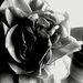 ružička
