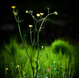 Svetlo v tráve