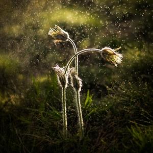 Milovanie v daždi