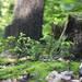 .inna forest