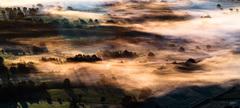 fog trees and shadows lights ...