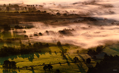 fog trees and shadows lights II