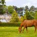 Koník na vidieku ...
