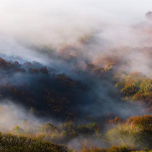 keď dýcha les ... II
