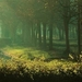 Lesík Nizozemský