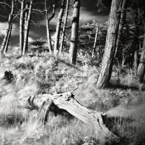V imaginárnom lese