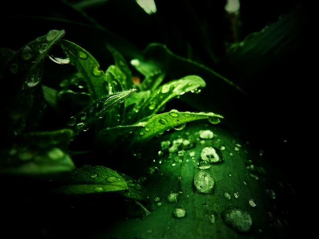 po daždi