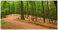 Tou lesnou cestou