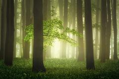 Tajomný les v Karpatoch