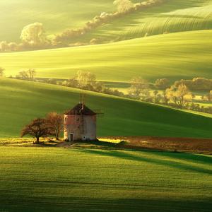 Kunkovická zelená