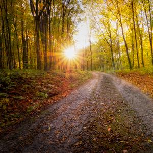 Cestou za svetlom