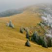 Jesennô,hmlistô,zimnô II
