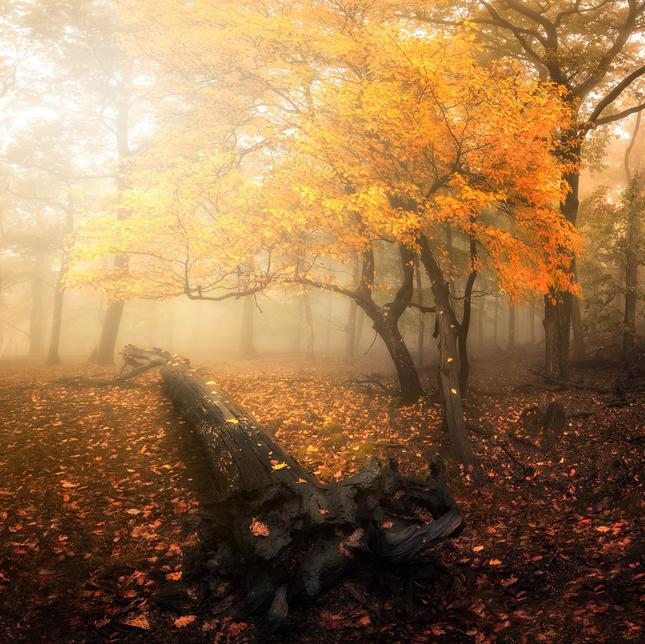 Jesenné Karpaty