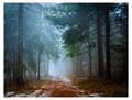 Na prechádzke lesom...