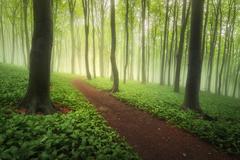 Svieža zelená