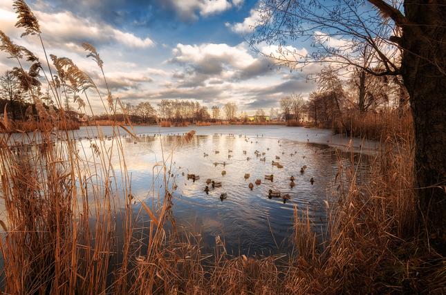 Pohodička na rybníku