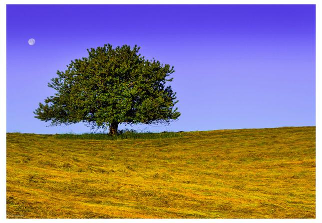 Stromec a mesiačik