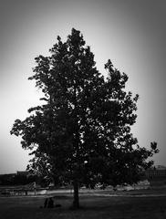Pod stromom na nabrezi