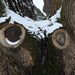má strom oči ?