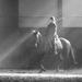 jazdec a kôň čb