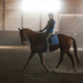 jazdec a kôň
