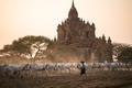 Pastviny v Bagane II