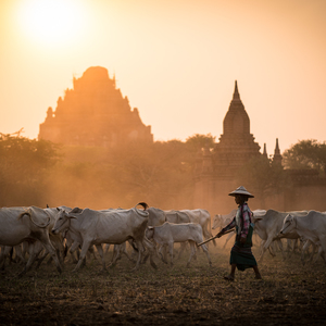 Pastviny v Bagane
