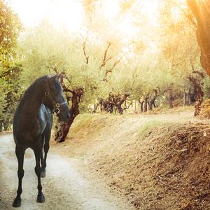 Godrays Horse
