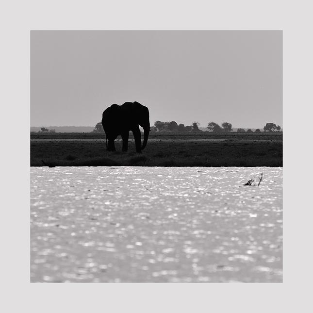 Slon na ostrove