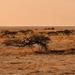 Africké horizonty