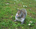 cheaky squirrel