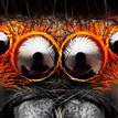 Oči - oOOo