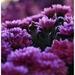 ...v kvetinárstve