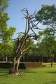 Polonnaruwa IV