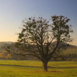Na stromech to vypadá ...