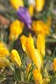 Rožnovská záhradka XI